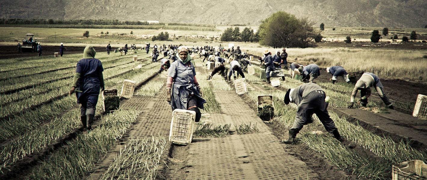 De Keur, Ceres, South Africa, Fruit & Vegatable Exporters